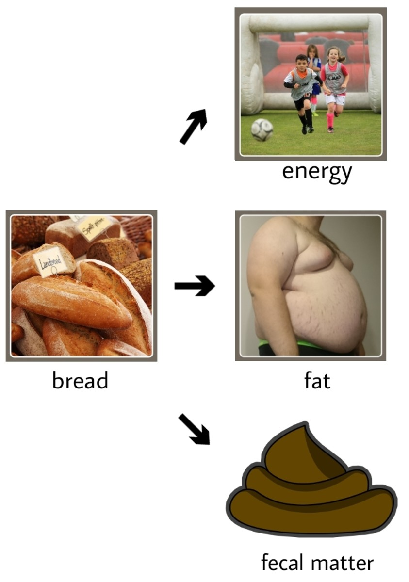 When food is digested in our body, it converts to new many substances. Like bread, when it digests, it converts to energy, fats, and fecal matter.