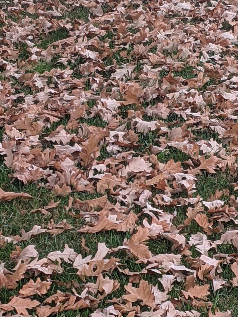 oak-leaves-so-many-craft-idea-one