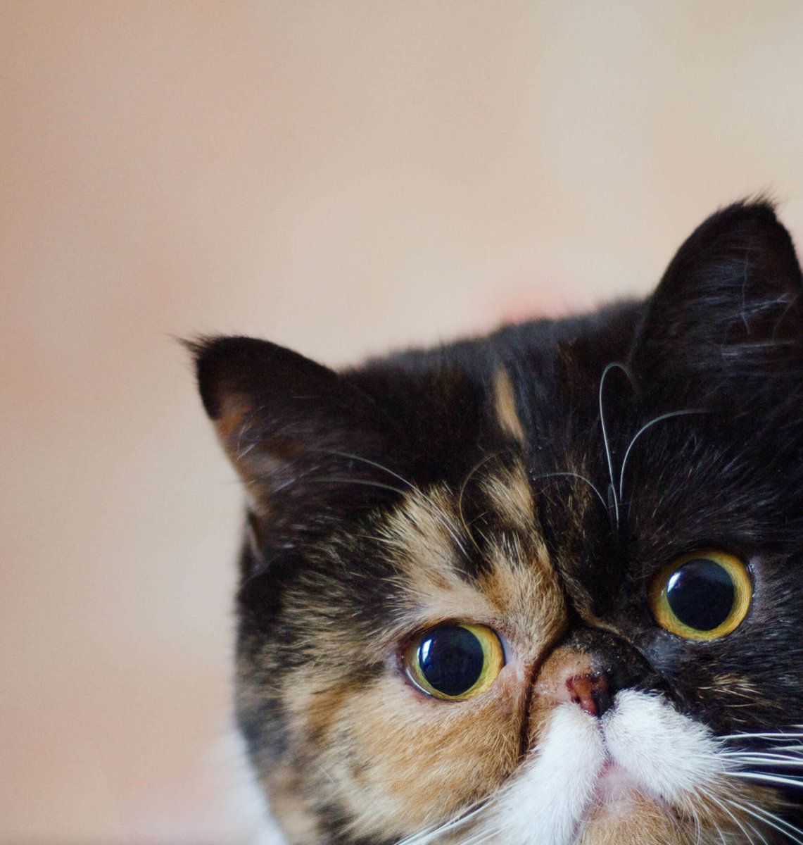 understanding-your-cats-bad-behavior-and-how-to-stop-it