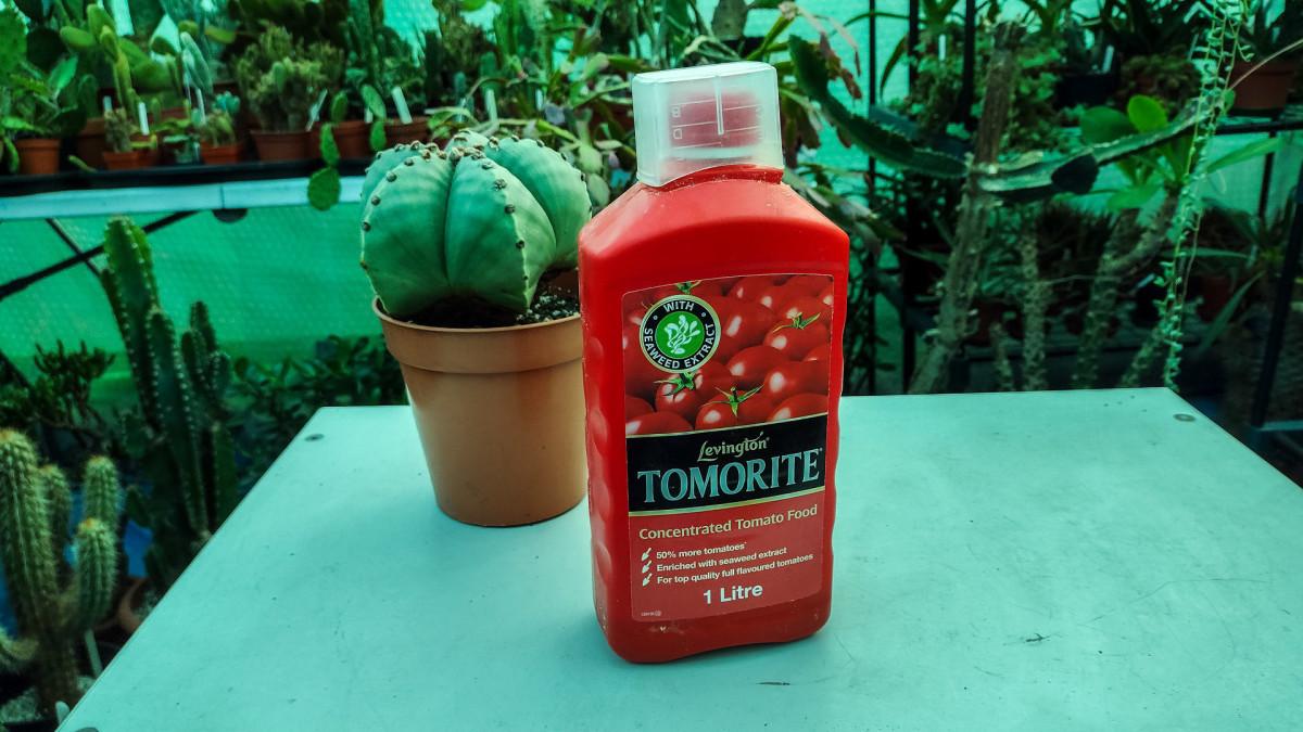 Use a high potassium fertilizer like tomato feed to encourage flowering.