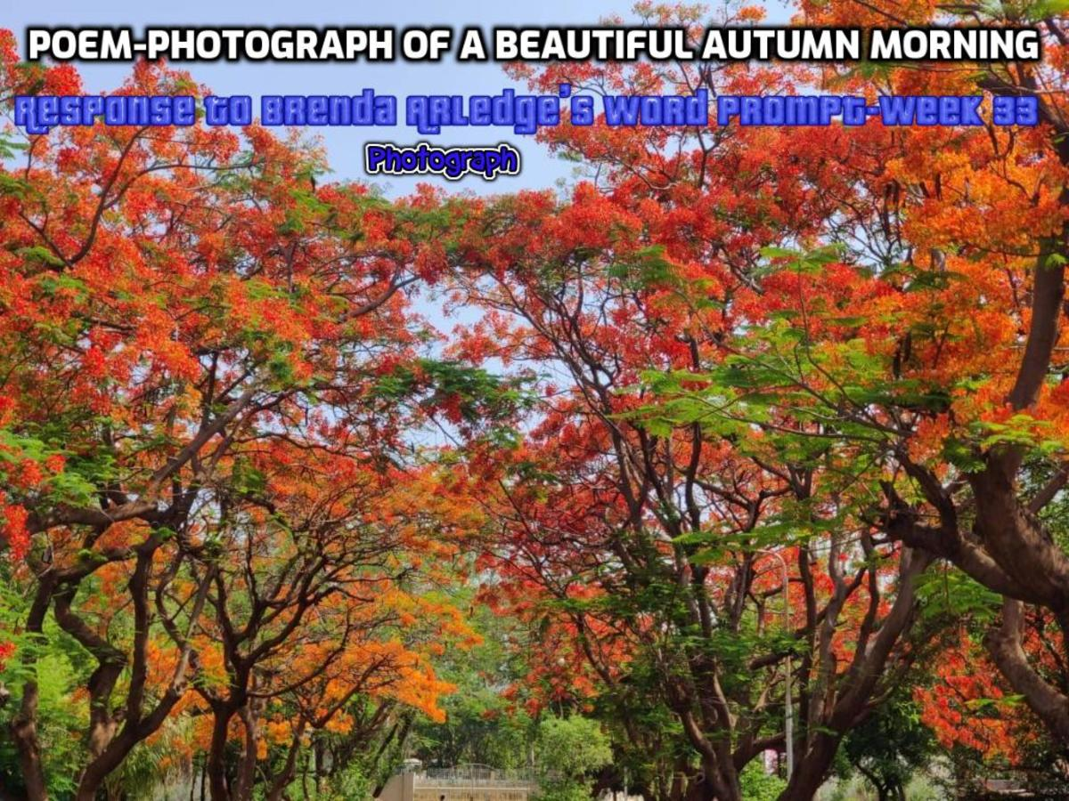 The beautiful colors of Autumn