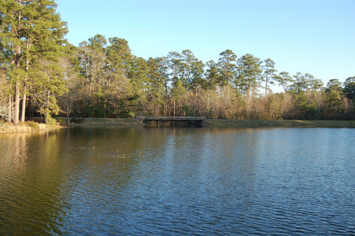 Double Lake Recreation Area and Campgrounds, Sam Houston National Forest, Coldspring, Texas