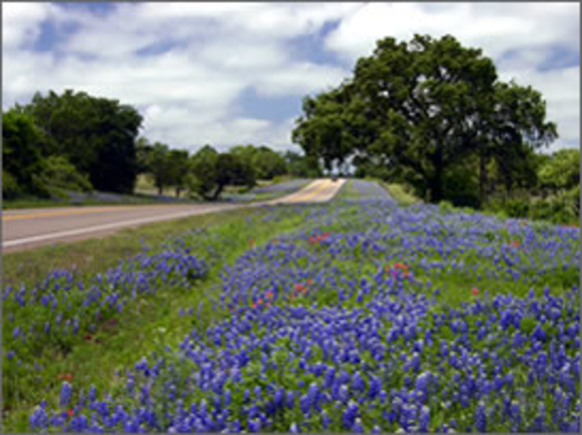 Miles of Bluebonnet Fields, A Texas Highway, Texas