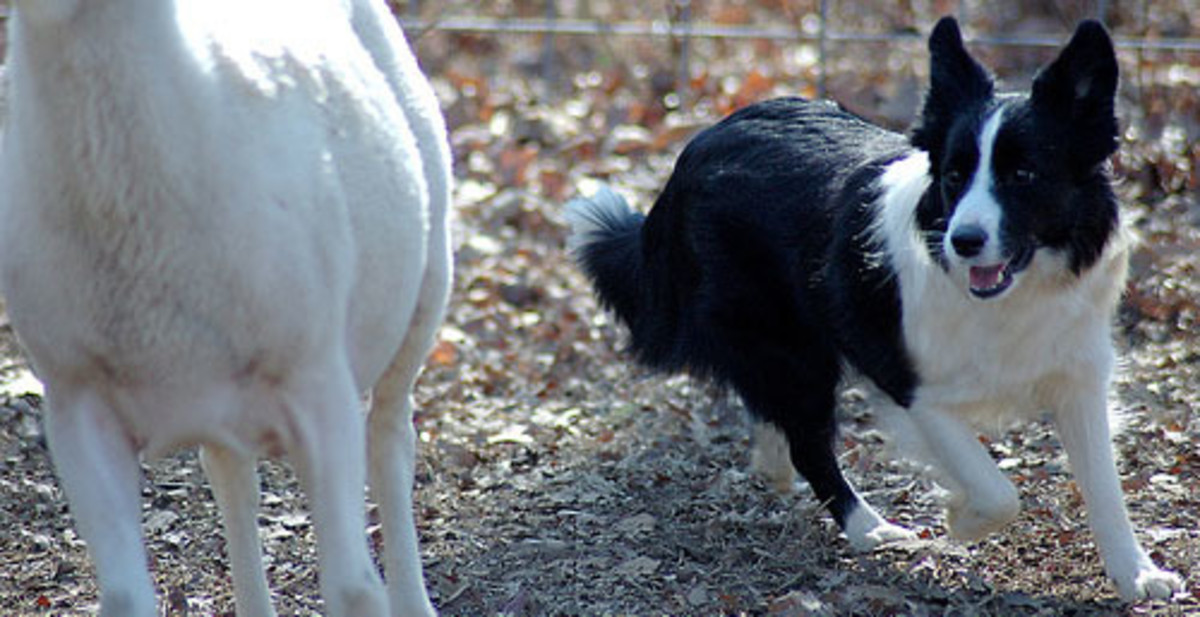 85 Country Dog Names That Start With - B