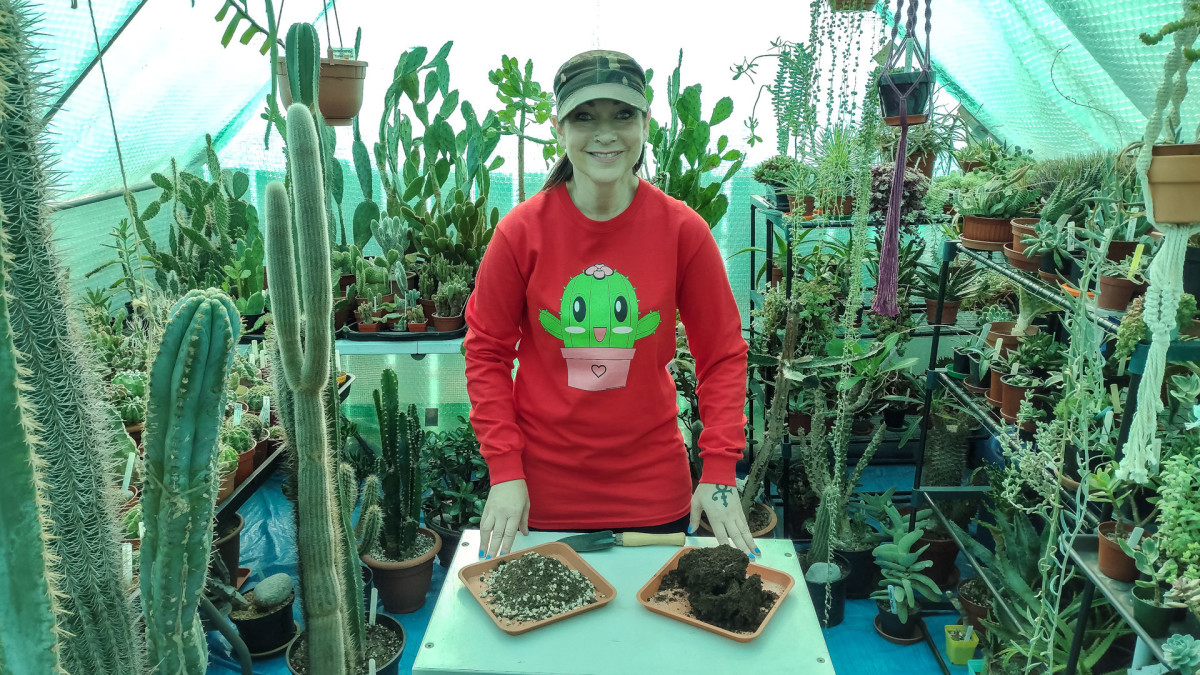 Cacti and succulent soil is drier than standard potting soil.