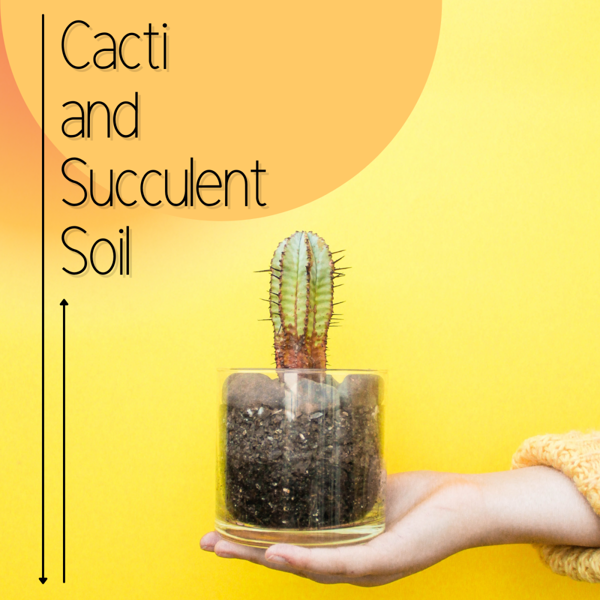 Cacti and succulent soil