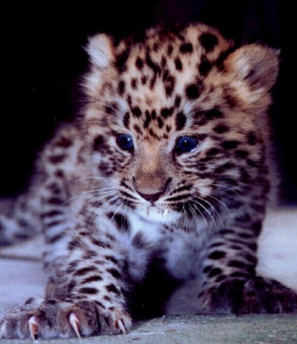 The Worlds Most Endangered And Rarest Animal Species