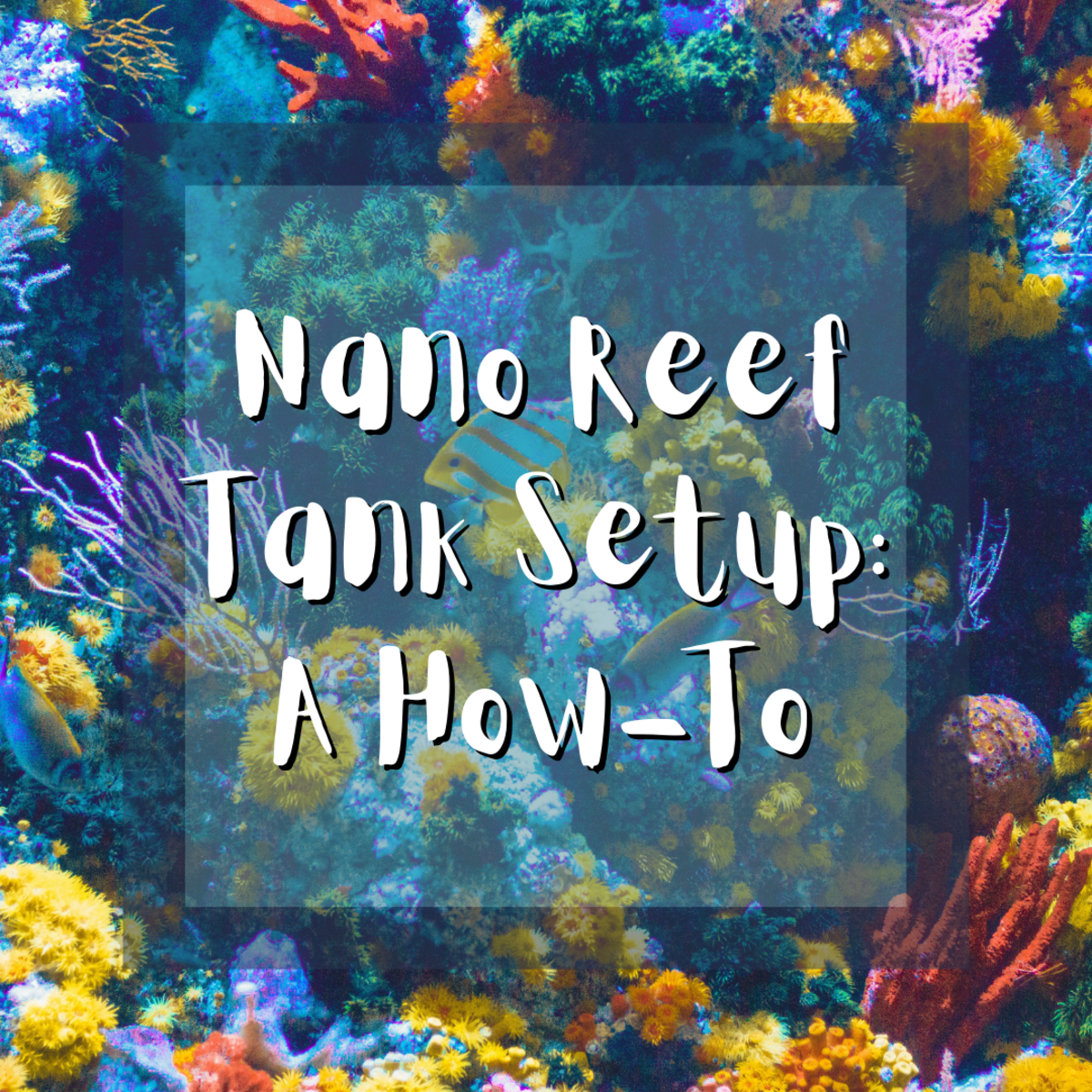 Learn everything you need to know about nano reef tank setup, from achieving proper pH and specific gravity to performing water changes and dealing with red slime algae.