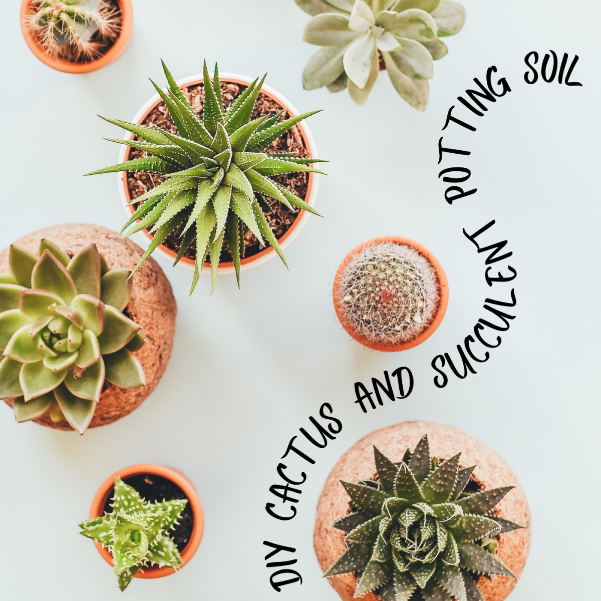 DIY cactus and succulent potting soil