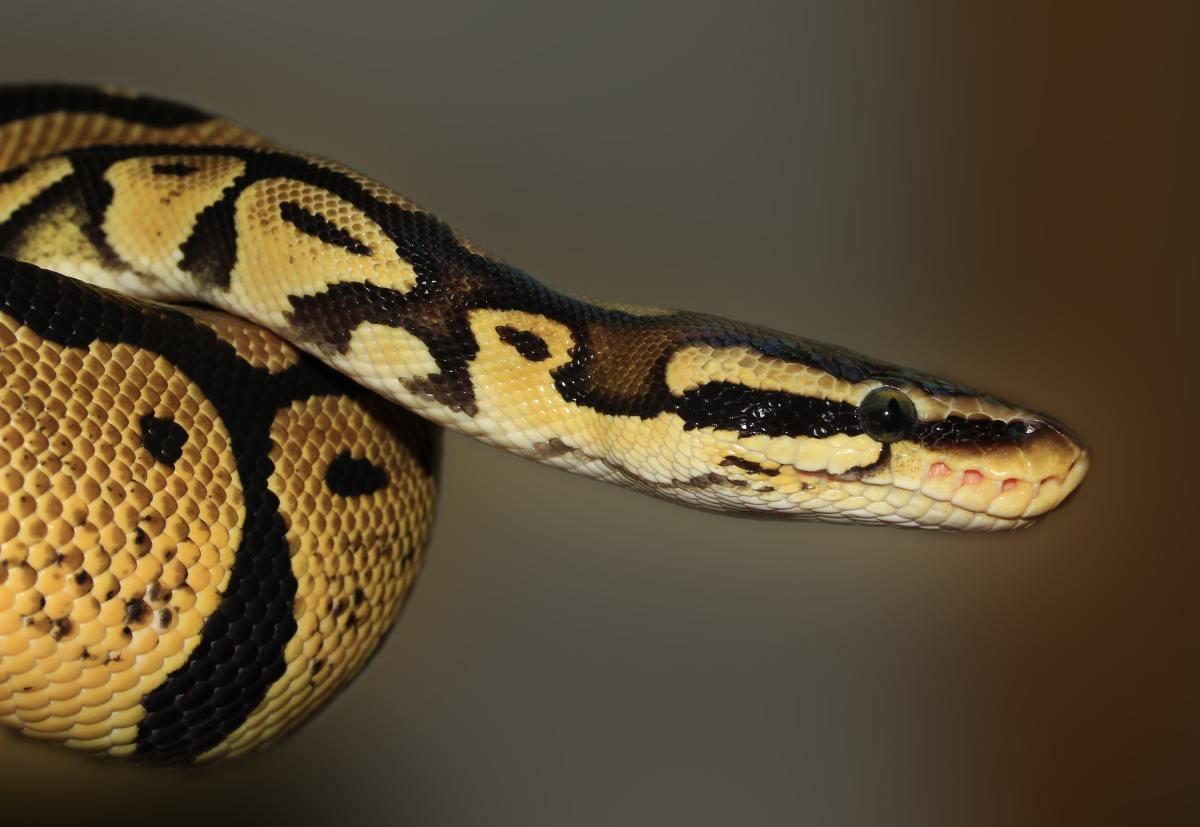 Top 5 Reptiles for Beginners