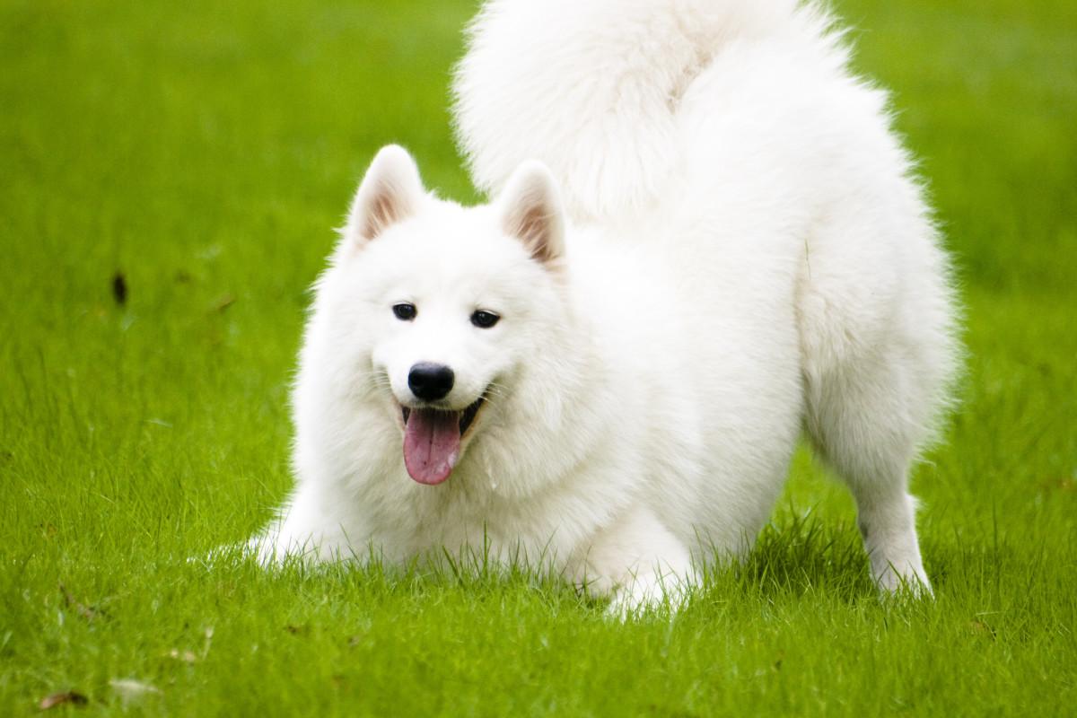 Dog Language, Dog Behavior, and Dog Training, with Videos