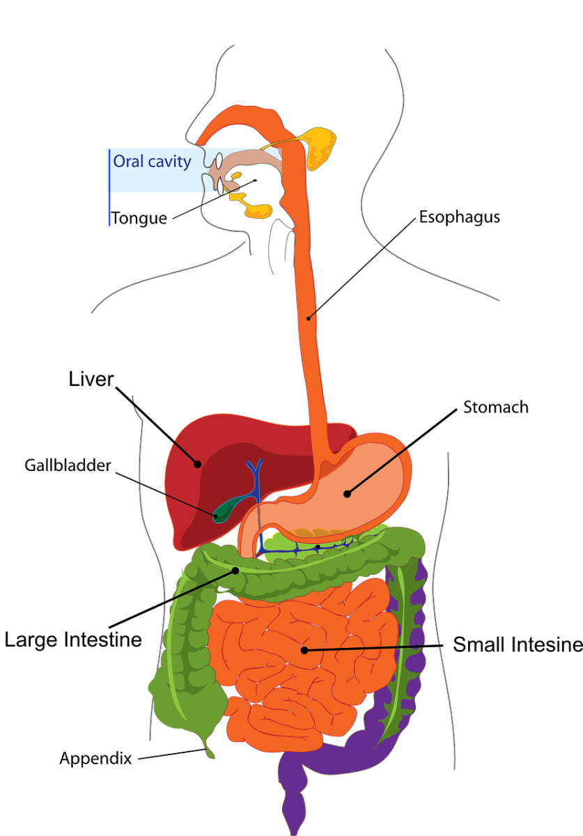 Gallbladder - Facts and My Experience