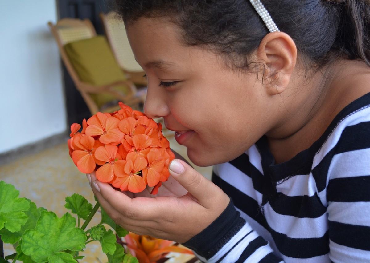 Our sense of smell: Image by Julio César Velásquez Mejía from Pixabay