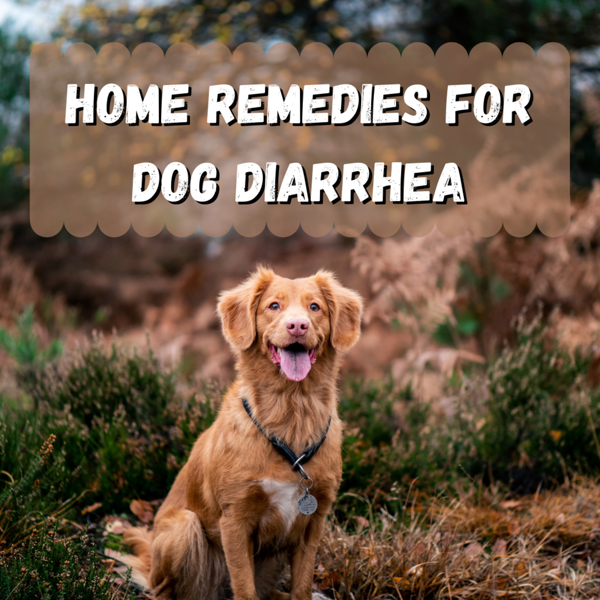 Read on to learn about how to take care of a dog suffering from diarrhea. The BRAT diet might be helpful for your pup!