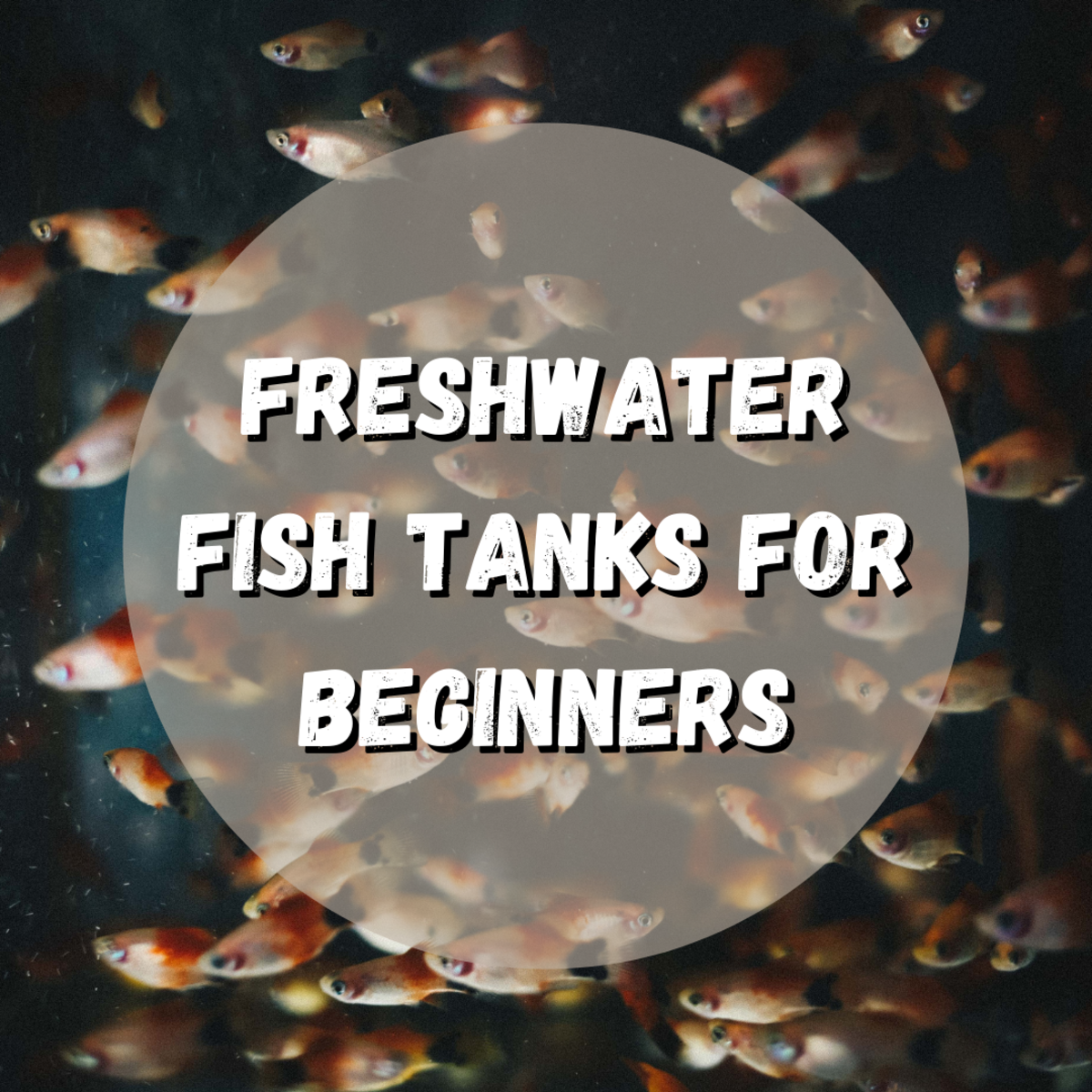 Discover everything you need to know about starting your own freshwater aquarium.