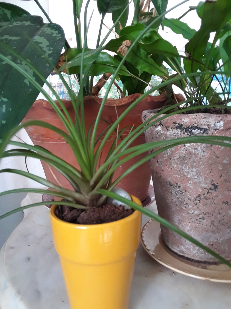 How to Choose the Best Pots for Houseplants
