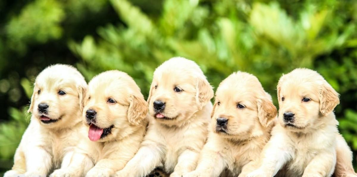 Top 5 Dog Breeds For Families
