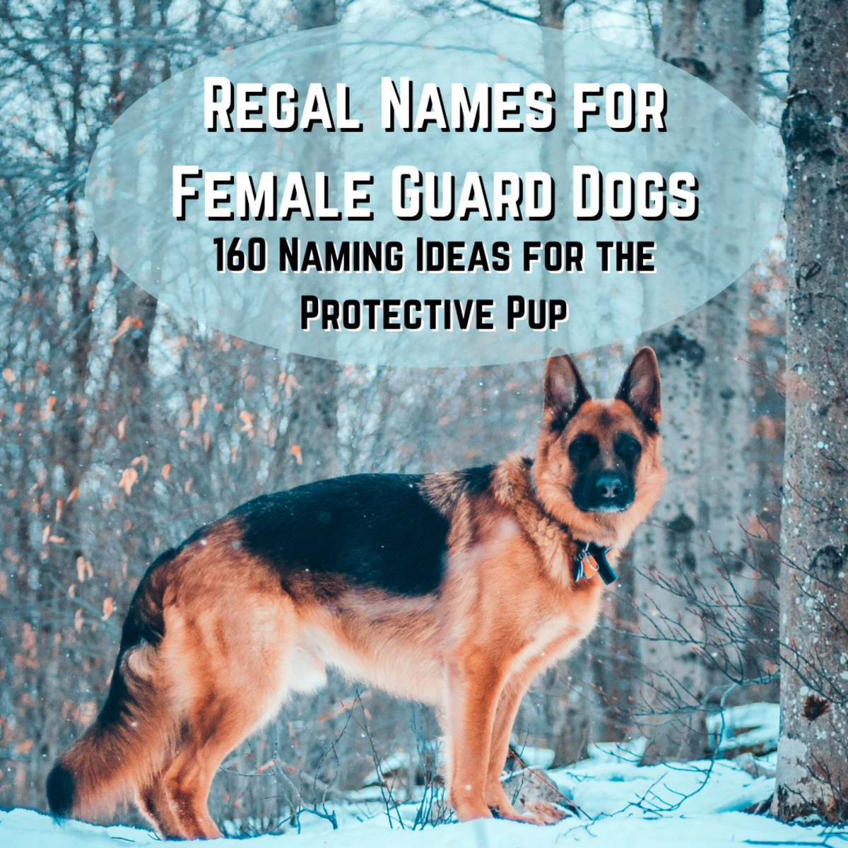 This article will provide more than 60 ideas for what to name your female guard dog.