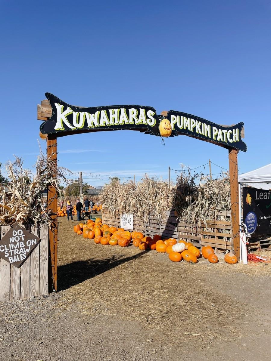 Best Pumpkin Patch at Kuwaharas's Pumpkin Patch