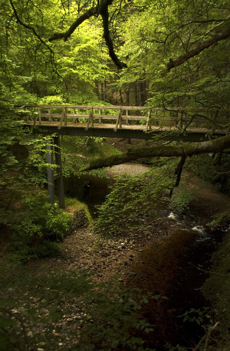Cawdor Castle Forest
