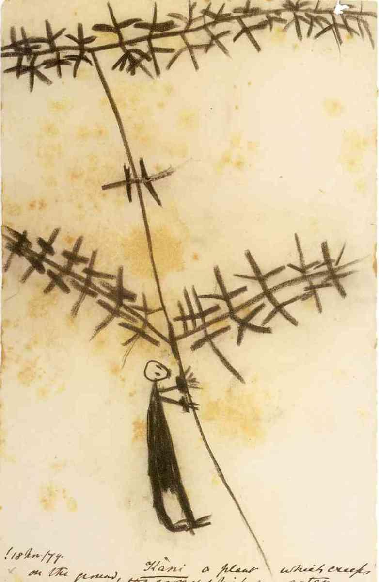 "The kani plant from ""the stars say 'tsau'"""