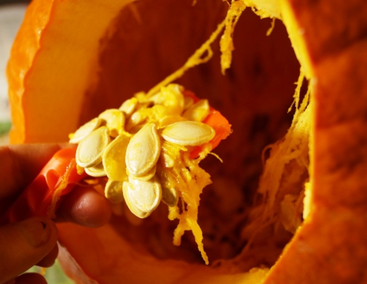 Use the scooper from your pumpkin kit to help you get all the pulp and seeds out.