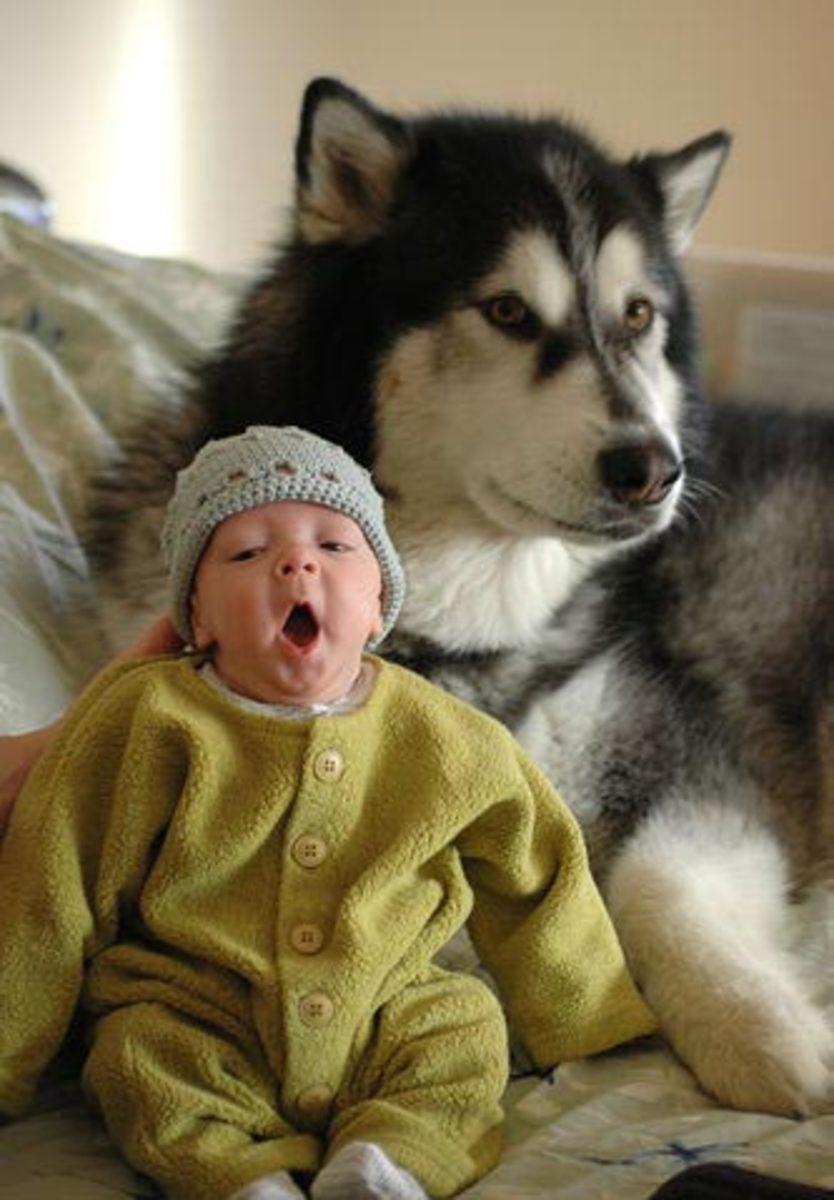 Malamute and baby