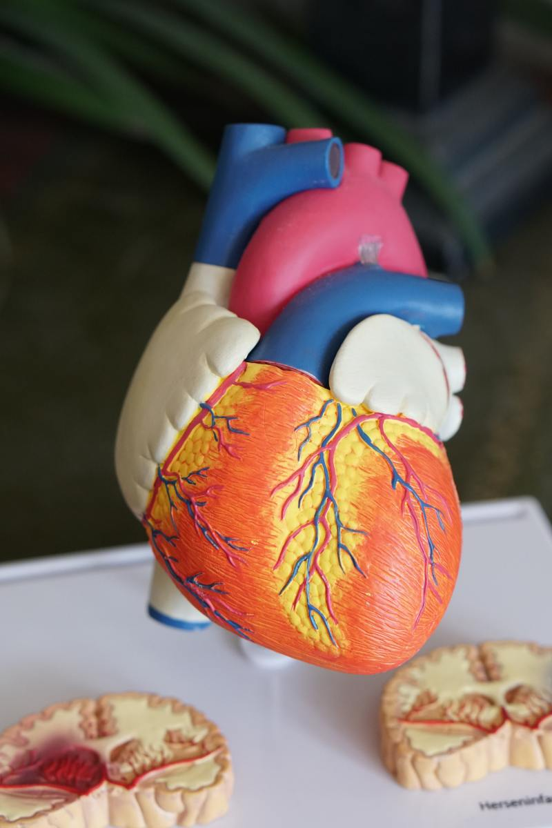 How to Get Fit and Healthy Heart