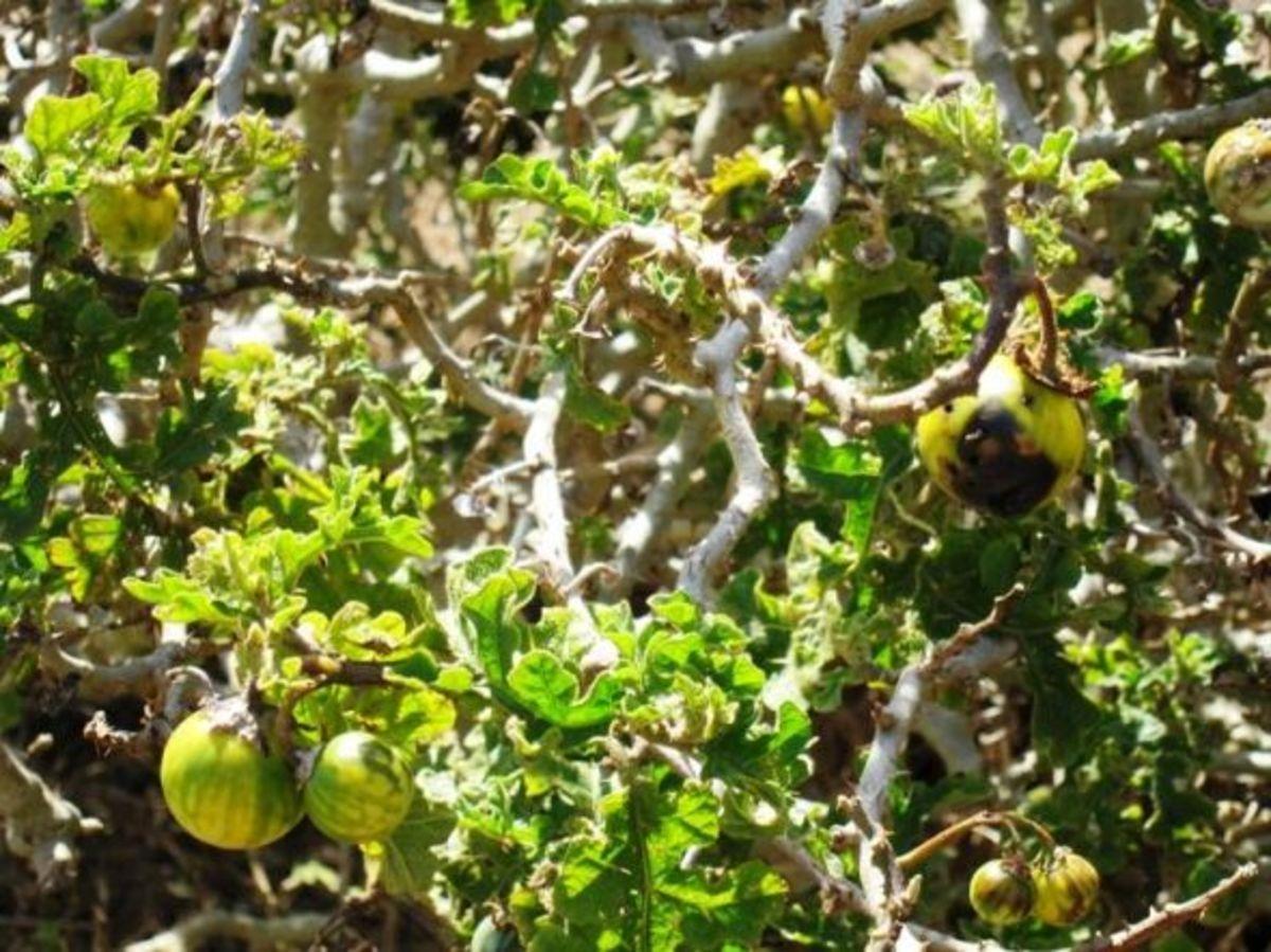 San Healing Plants