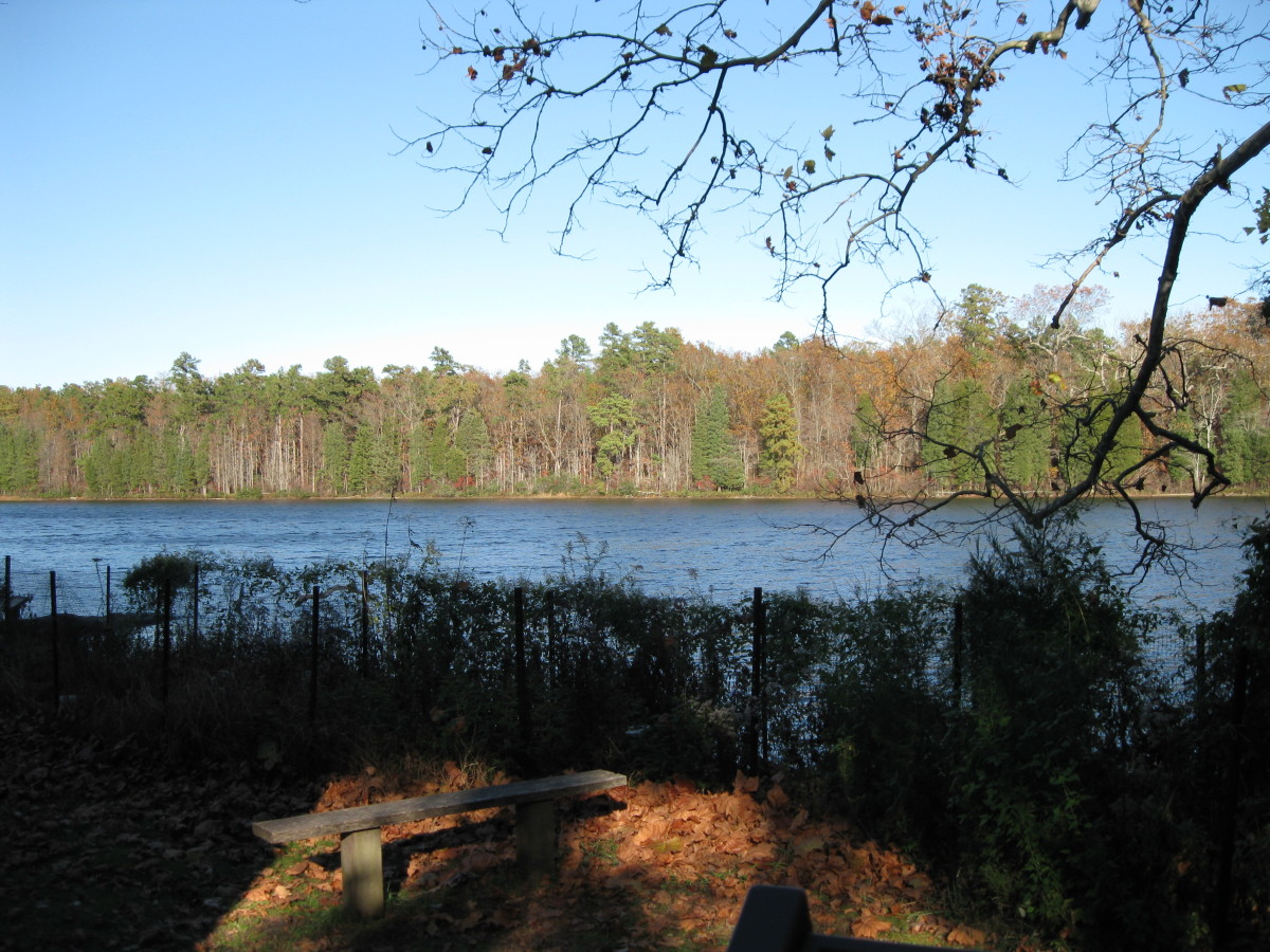 Lake view from Nature Center