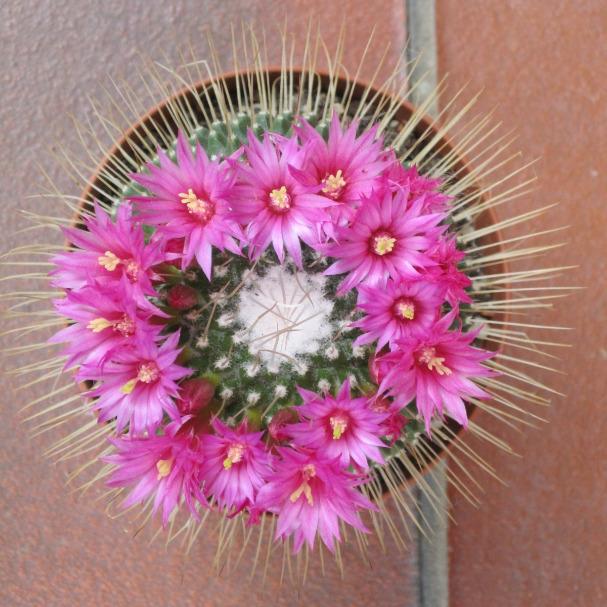 10 Most Beautiful Plants in the World