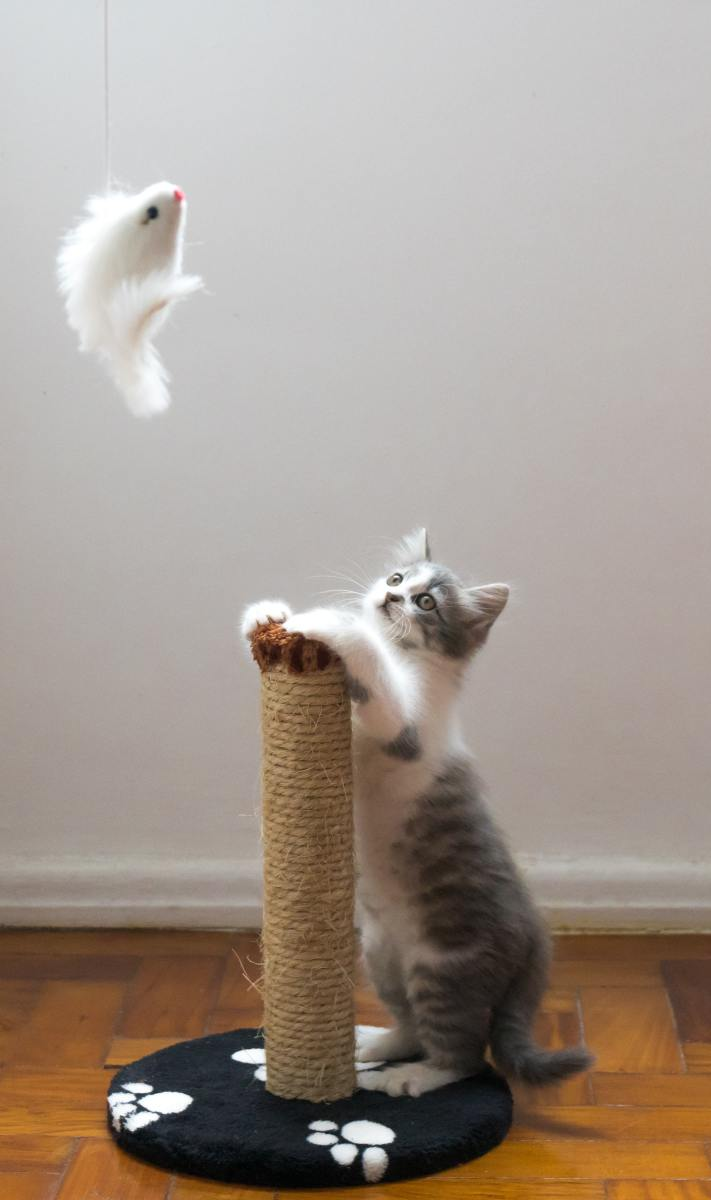 Playing With Cat; Fun Games You Need to Try