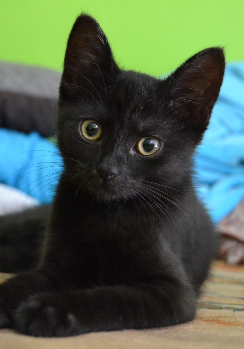 "My kitty, aka ""Pumpkin"". Isn't he handsome?"