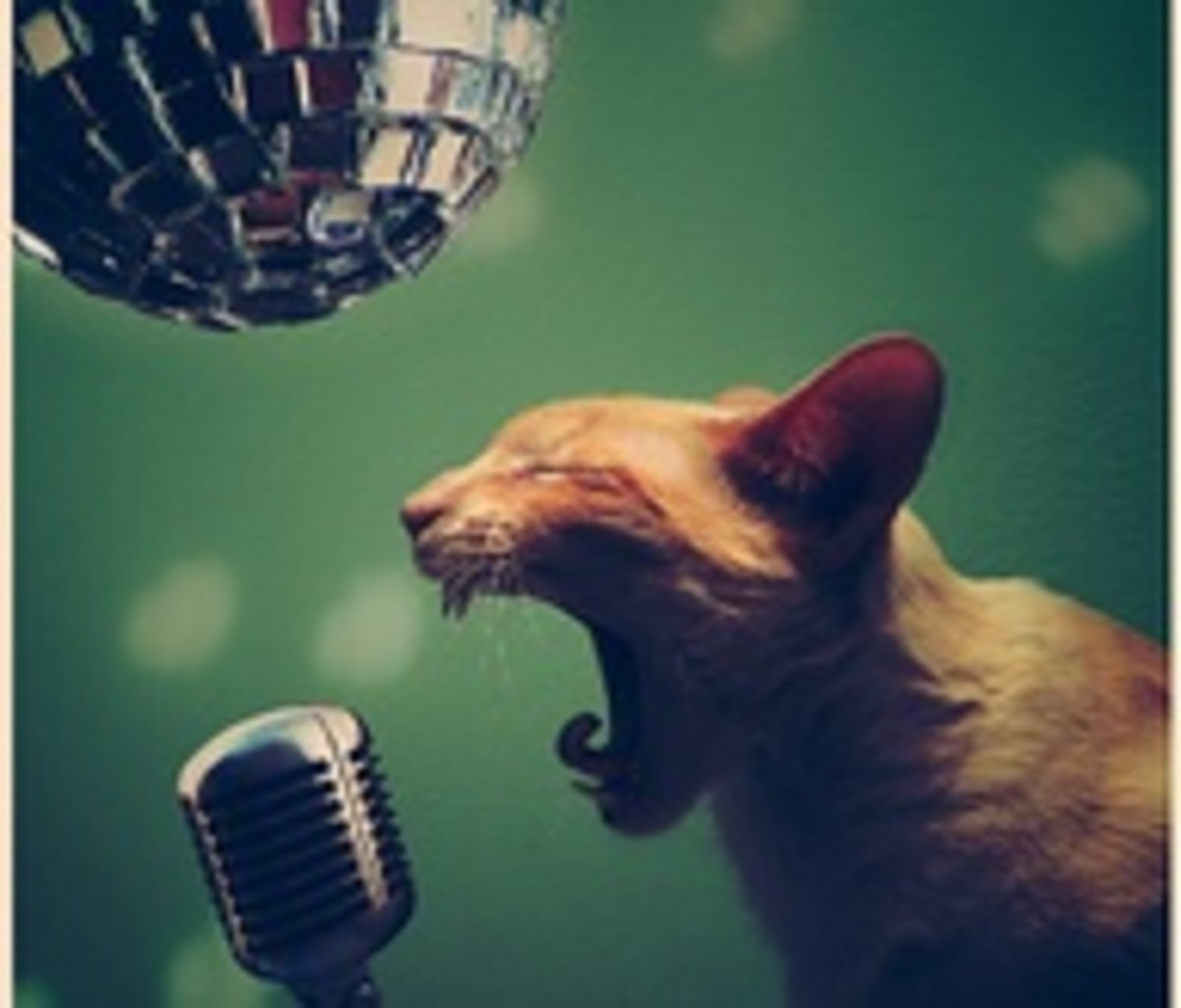 The Fifth Secret is: That animals really do love to party hard! But no matter what, the most observed rule within the pet's rule book; is that no pet ever drives home drunk!