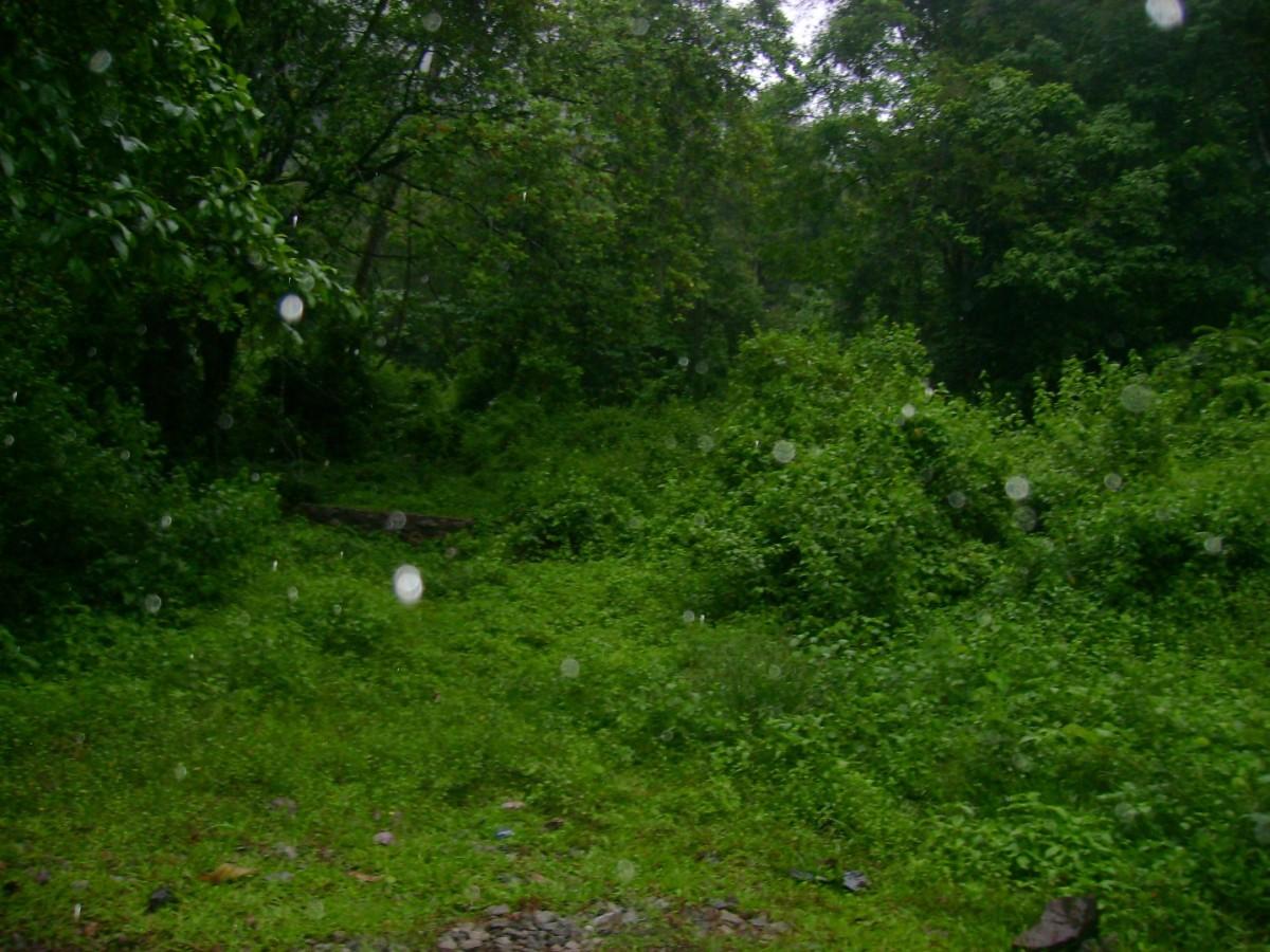 Moozhiyar Forest