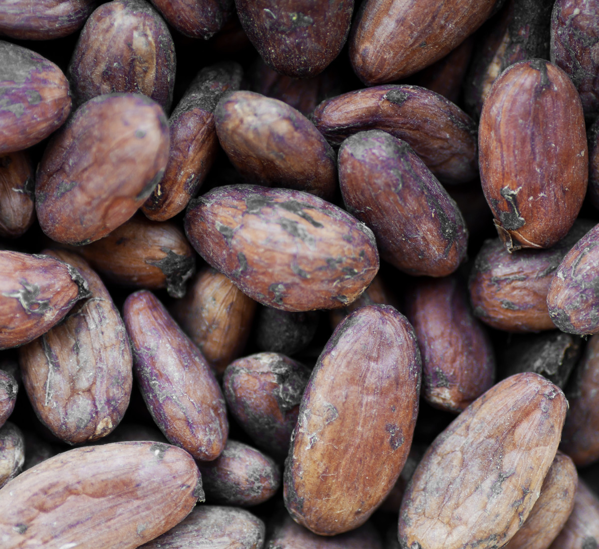 Raw Cacao beans from Copán.
