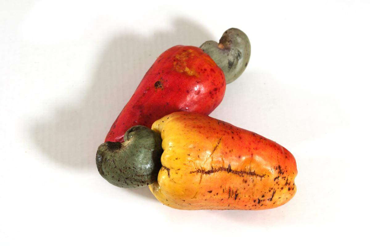 Marañon with cashew nuts.