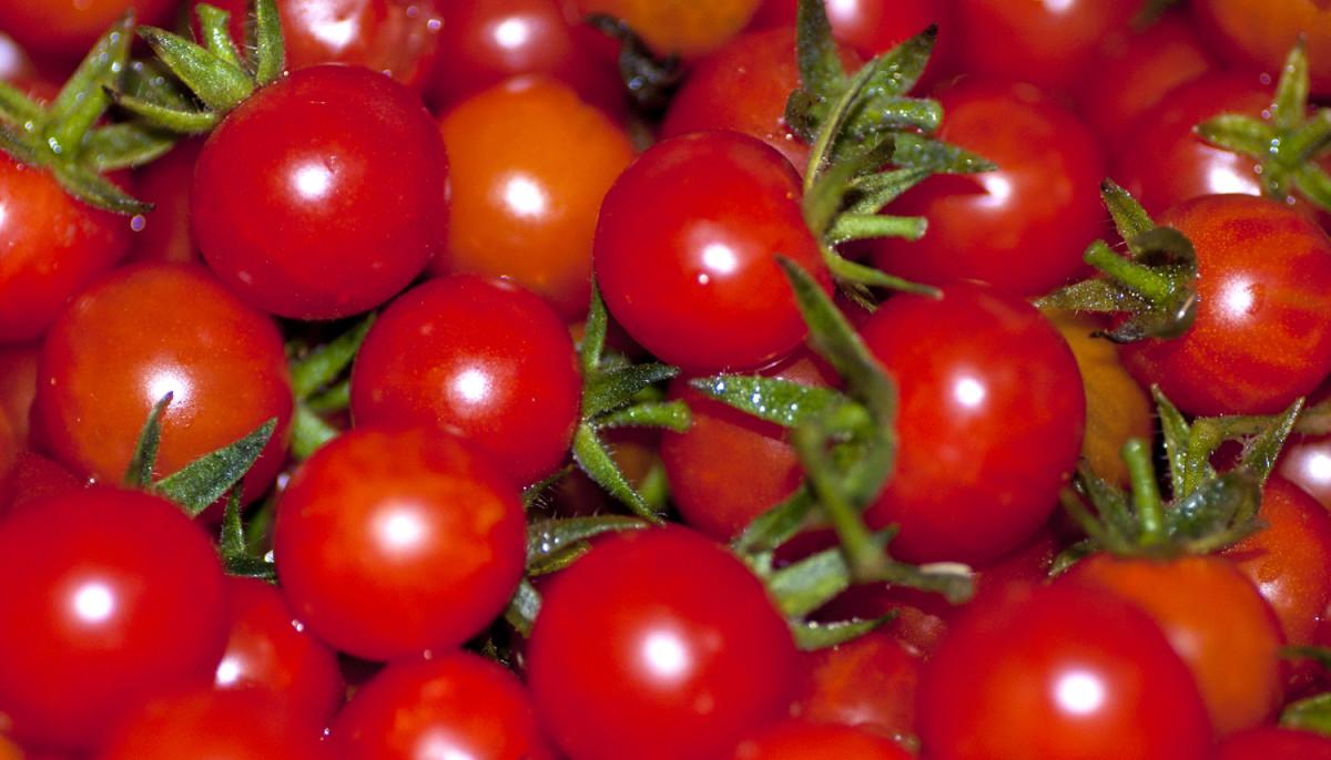Wild Honduran cherry tomatoes.
