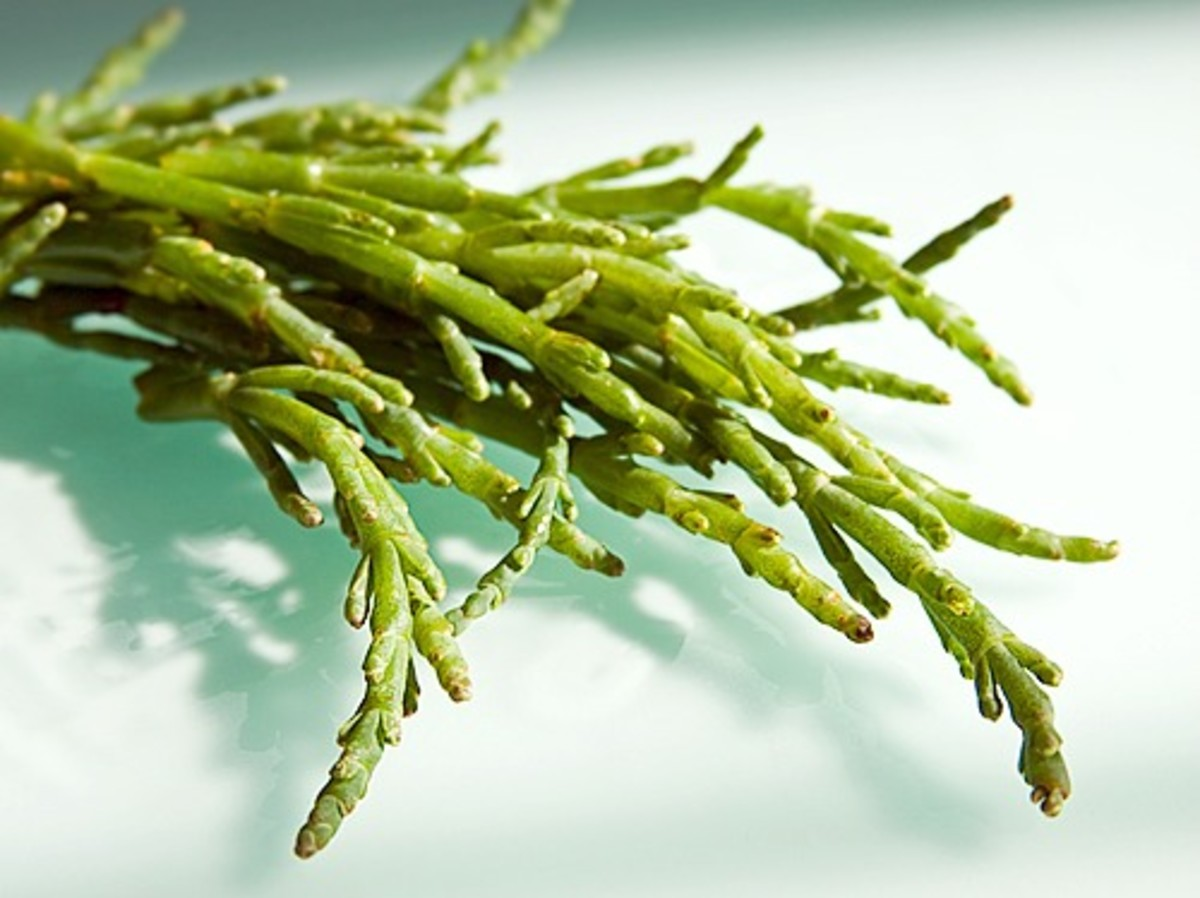 Sea beans are naturally salty.