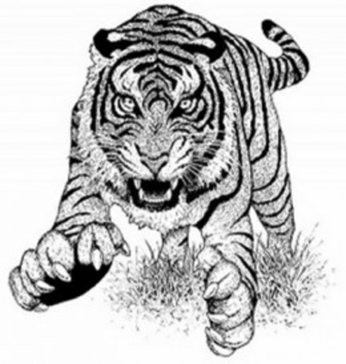 Endangered Animal Mammals Kids Coloring Pages Free