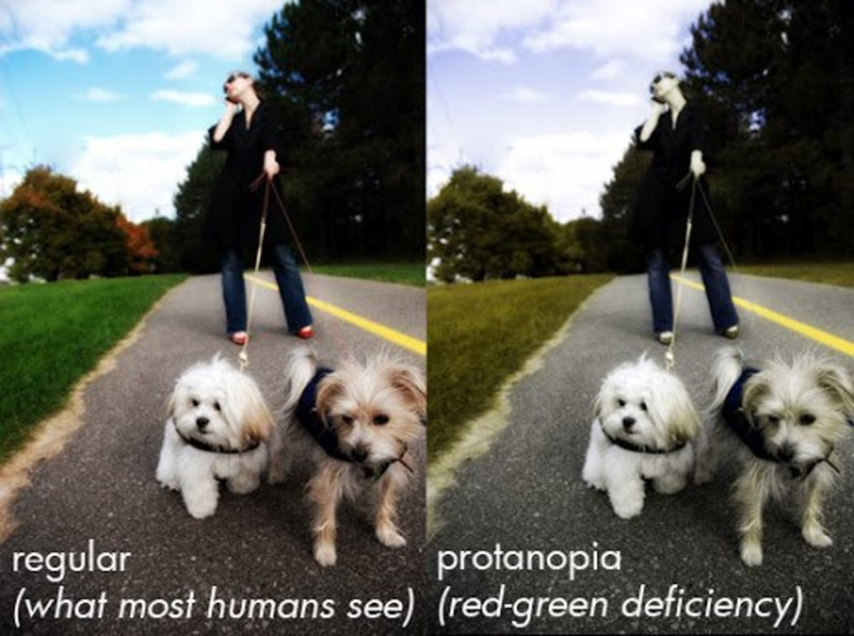 Look at this scene through typical human eyes (left) and dogs eyes (right)