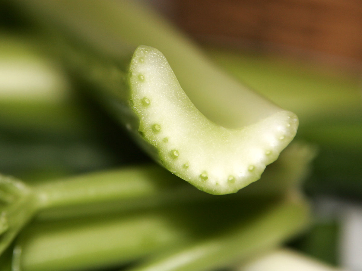 The Incredible Celery Plant