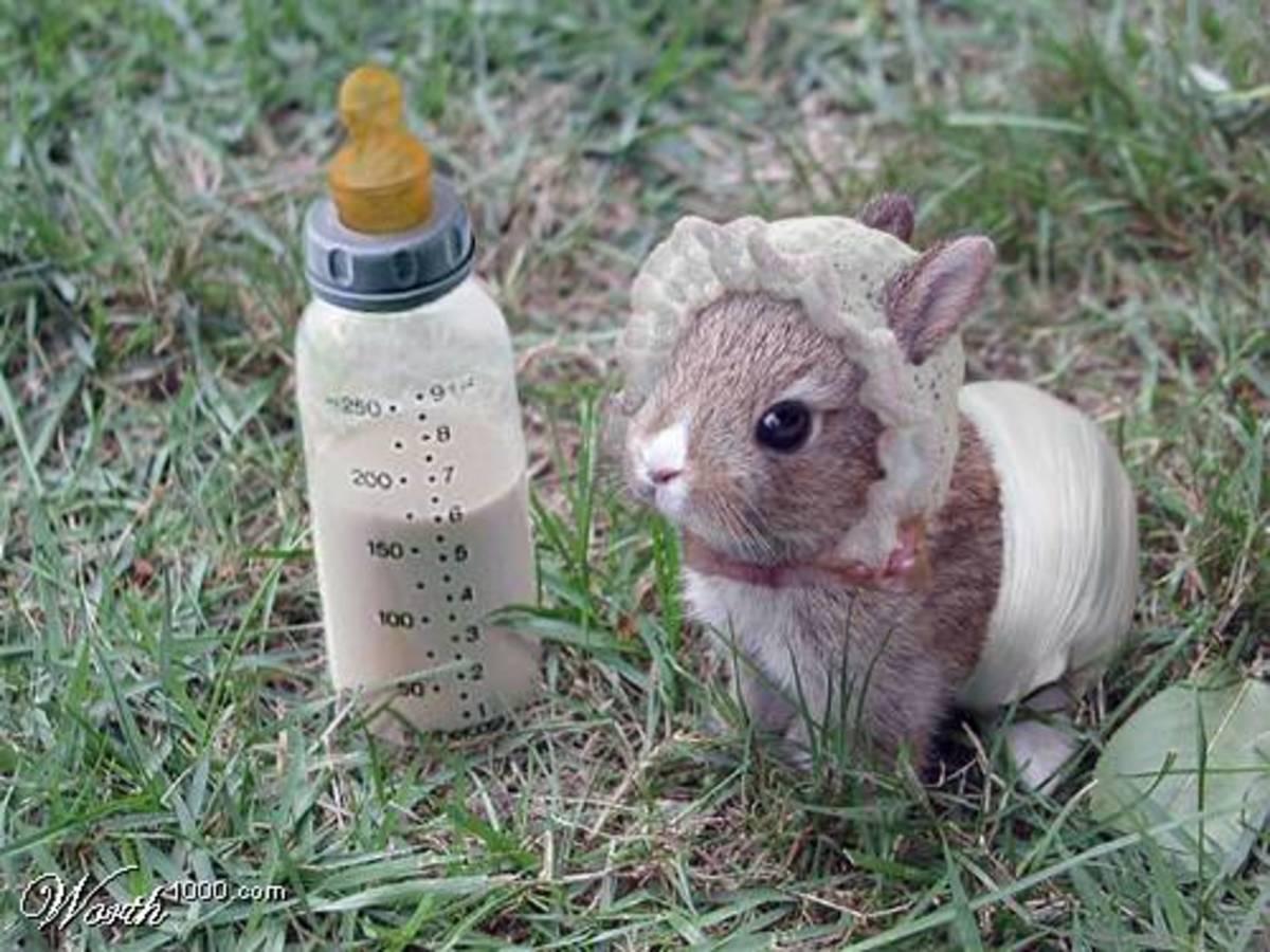Should I Let My Rabbit Have Babies?