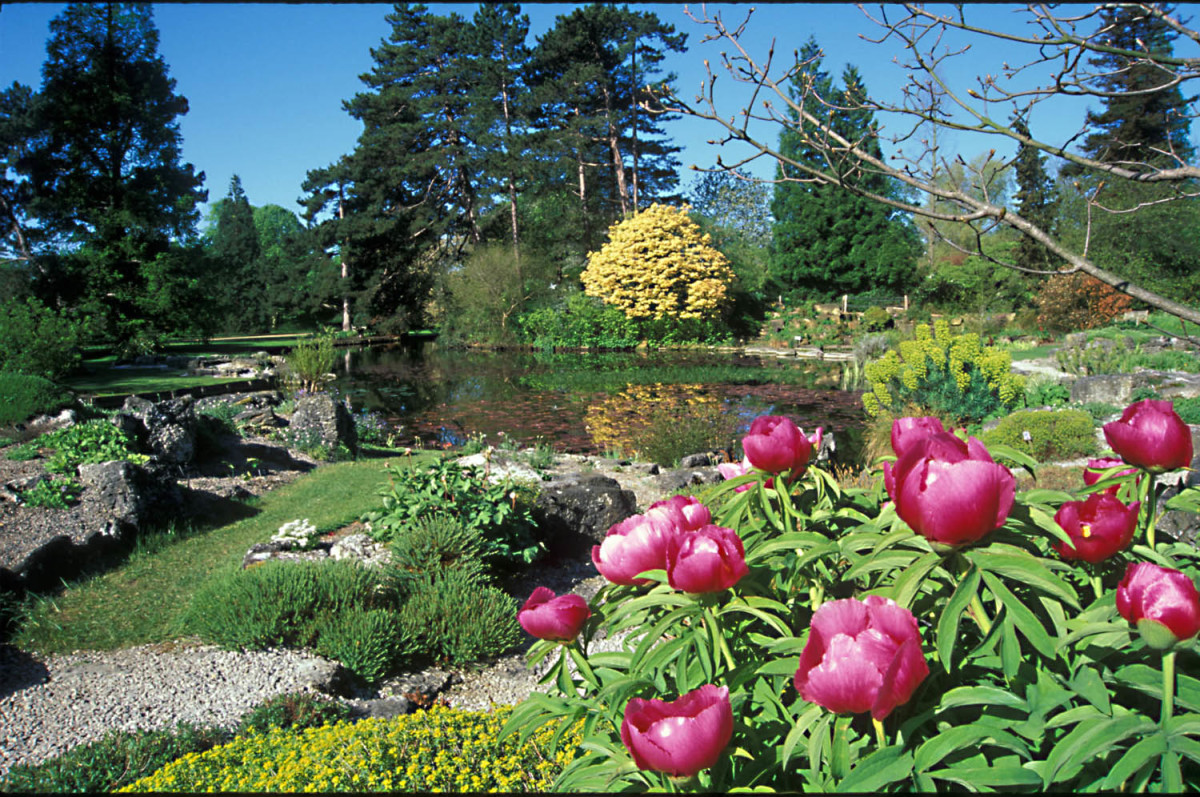 The Rock Garden around the Lake. Beyond is the Woodland Garden