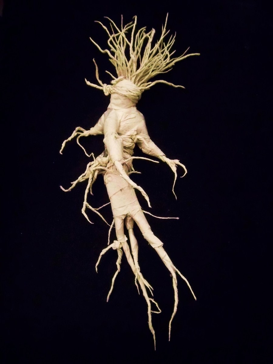 The Real Mandrake Root xenolithic.blogspot.com