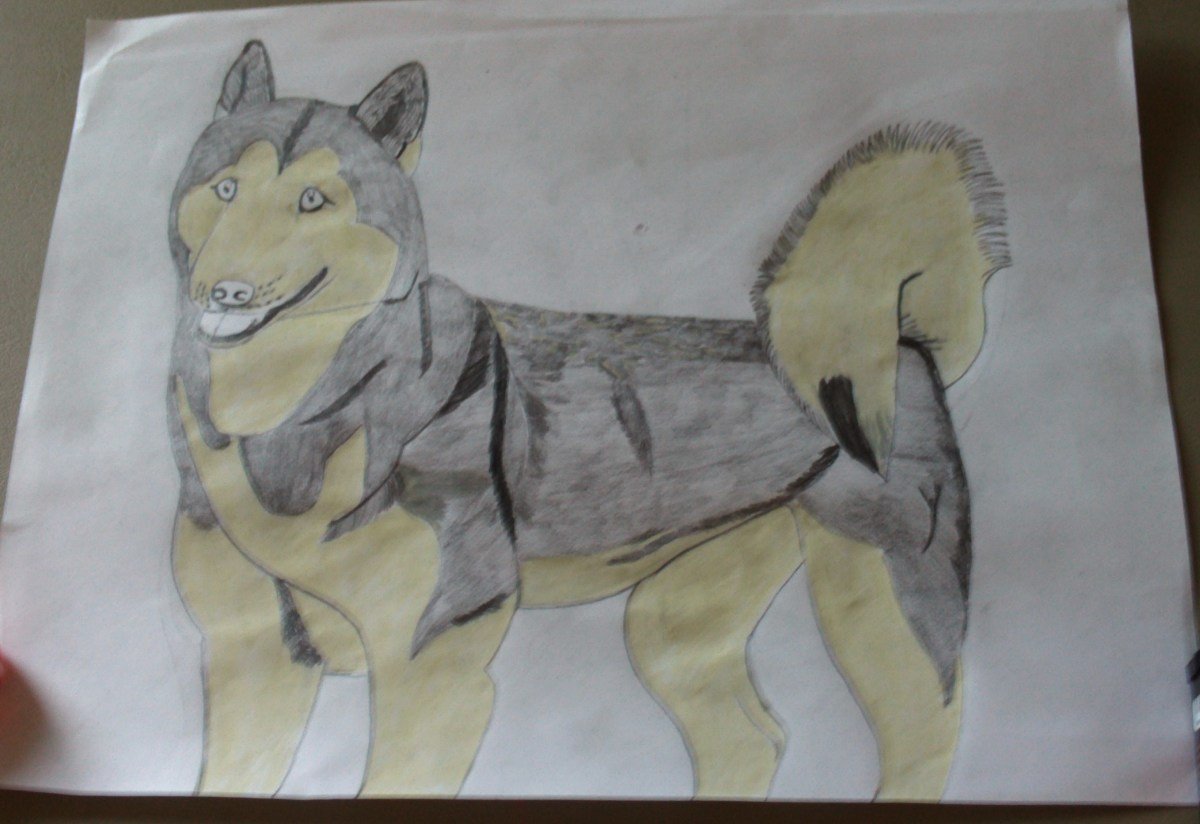 In this step of the process I colored in the lighter portions of my Siberian Husky dog Natasha.