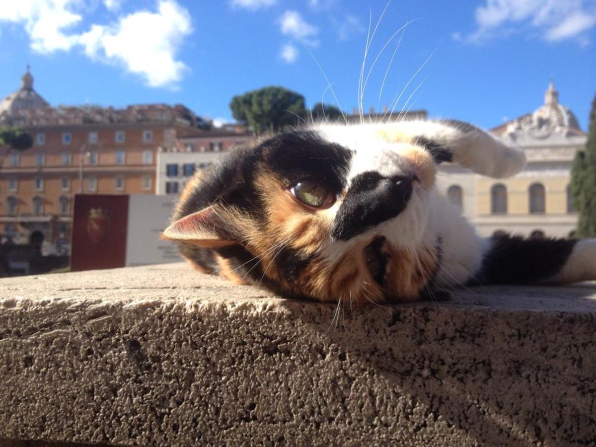 My personal favorite kitty and best Roman cat-friend. Isn't she cute