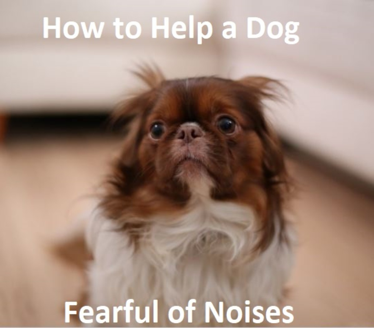 How to Help a Dog Fearful of Loud Noises