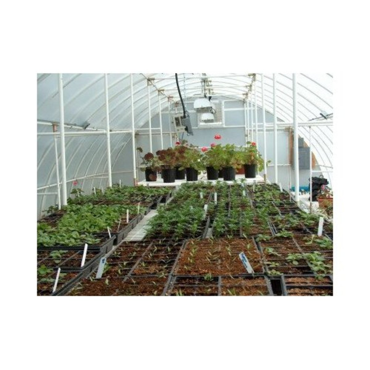 Solexx Conservatory