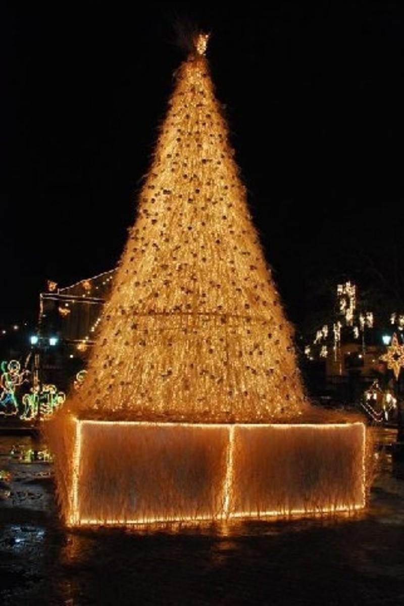 A Christmas Tree (http://aphs.worldnomads.com/jeffbrad/15074/DSC_6170.jpg)